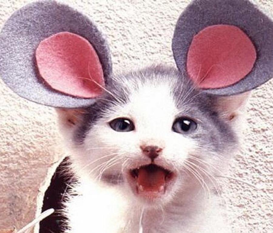 Самые забавные костюмы собак и котов на Хэллоуин #5 | ZestRadar