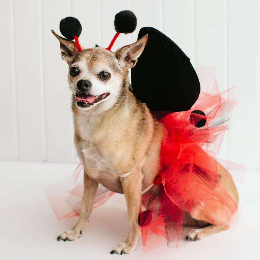 Самые забавные костюмы собак и котов на Хэллоуин #8 | ZestRadar