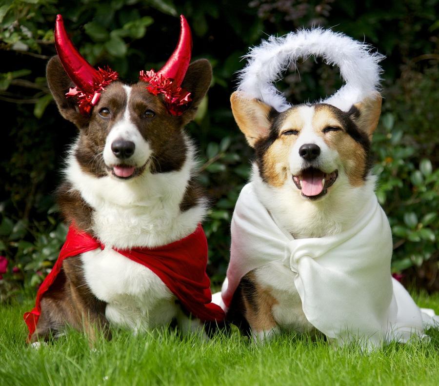 Самые забавные костюмы собак и котов на Хэллоуин #9 | ZestRadar
