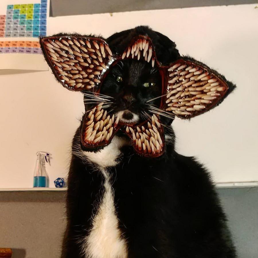 Самые забавные костюмы собак и котов на Хэллоуин #7 | ZestRadar