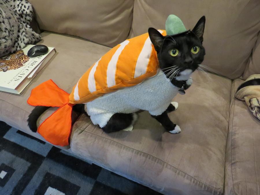 Самые забавные костюмы собак и котов на Хэллоуин #10 | ZestRadar