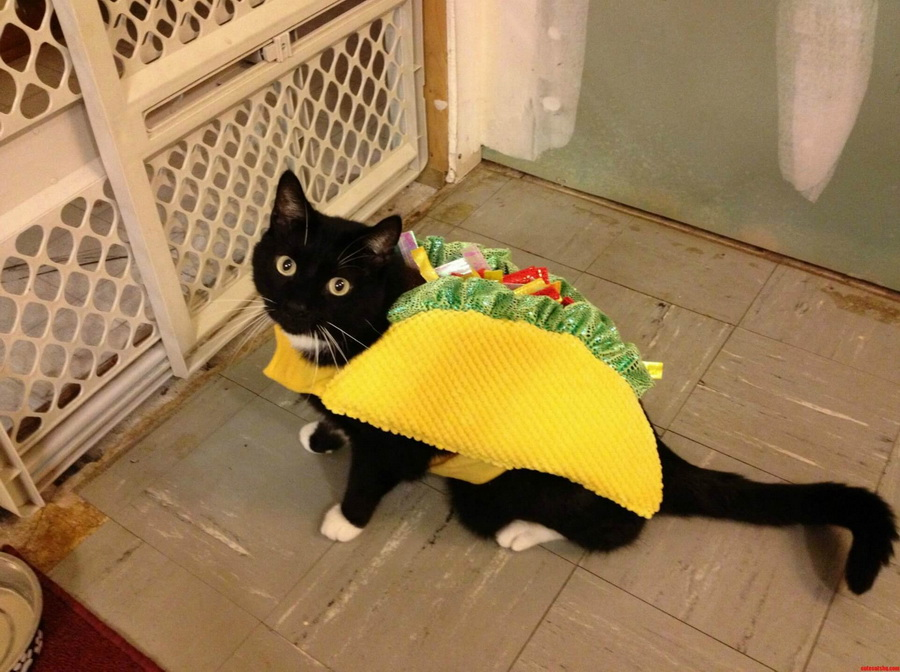 Самые забавные костюмы собак и котов на Хэллоуин #12 | ZestRadar