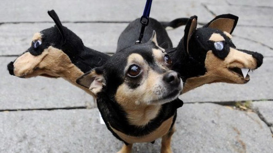 Самые забавные костюмы собак и котов на Хэллоуин #13 | ZestRadar
