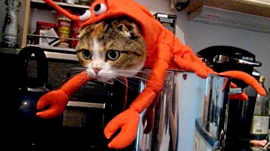Самые забавные костюмы собак и котов на Хэллоуин #14 | ZestRadar
