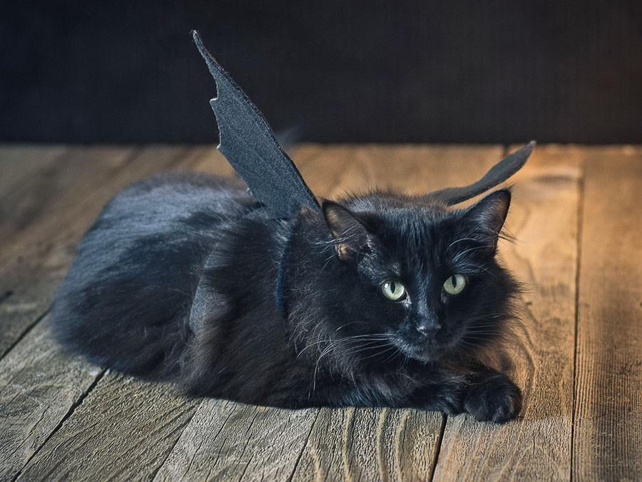 Самые забавные костюмы собак и котов на Хэллоуин #11 | ZestRadar