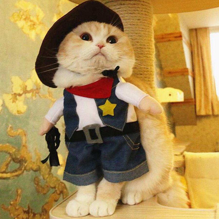 Самые забавные костюмы собак и котов на Хэллоуин #1 | ZestRadar
