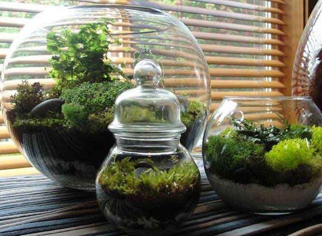 Зимний сад в аквариумах | 7 хобби, которые подойдут каждому | Zestradar