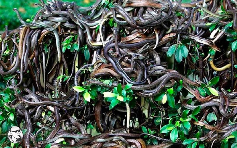 Змеиный остров | Посторонним вход запрещен: 10 самых закрытых мест на планете | Brain Berries