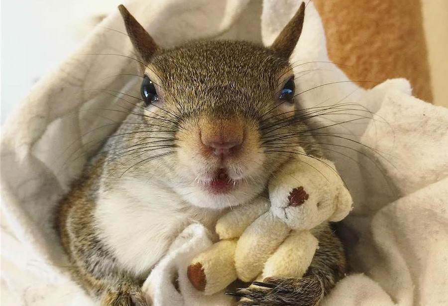 Jill The Rescued Squirrel Who's Taking Over The Instagram | Zestradar