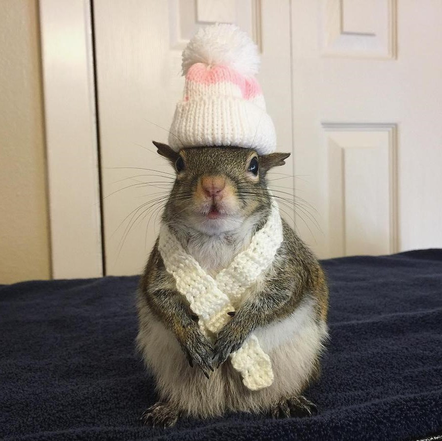 #11 | Jill The Rescued Squirrel Who's Taking Over The Instagram | Zestradar
