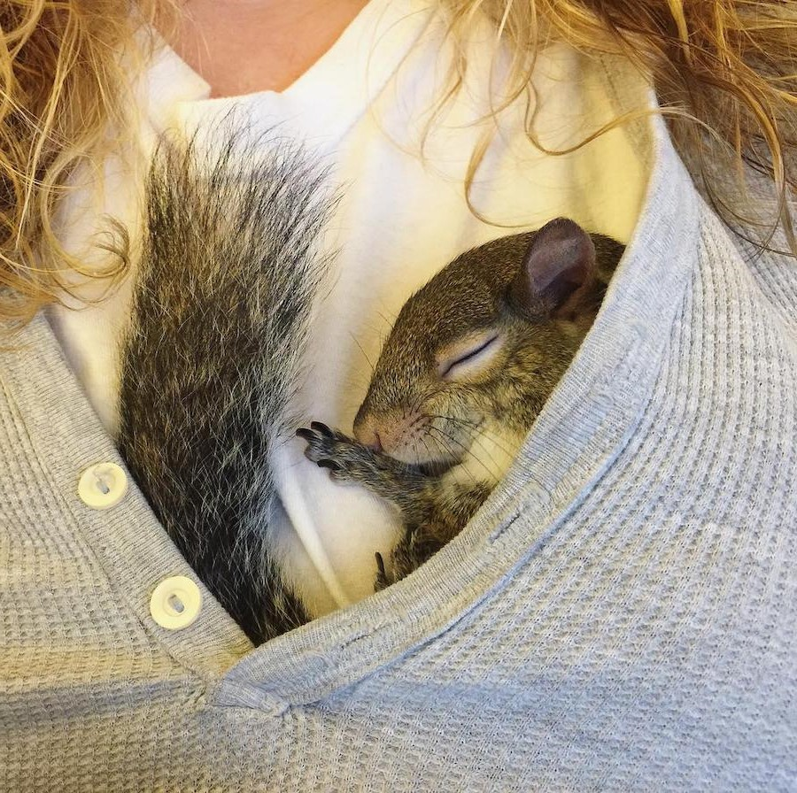 #16 | Jill The Rescued Squirrel Who's Taking Over The Instagram | Zestradar