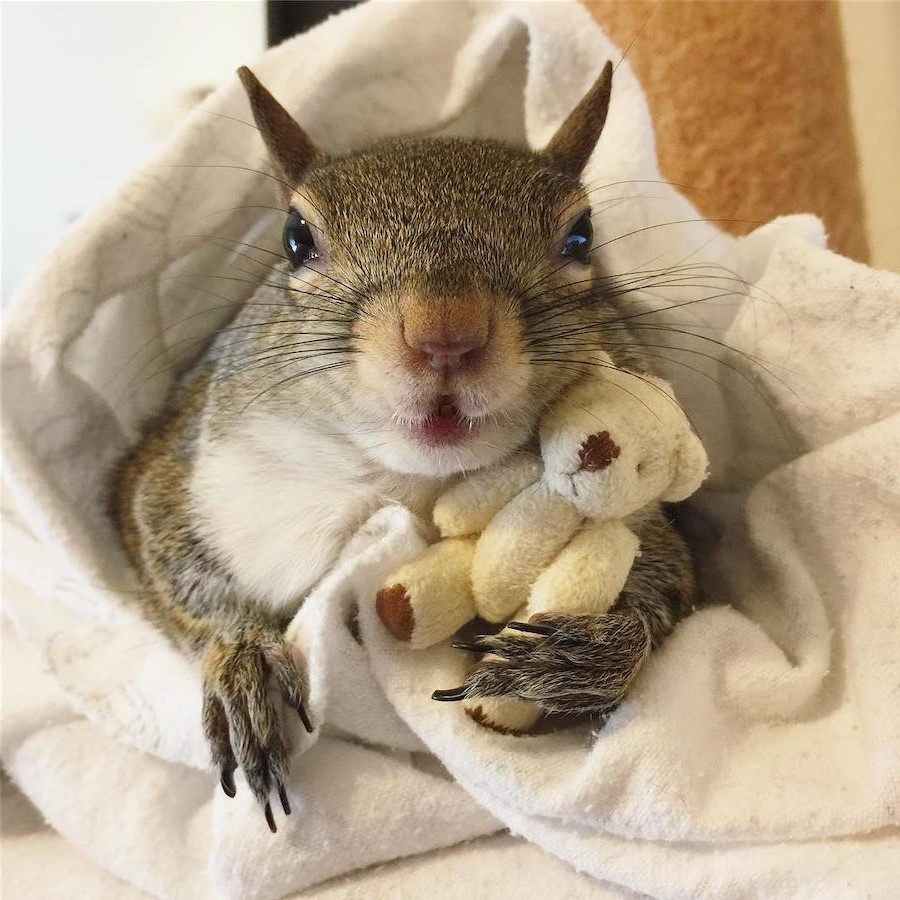 #17 | Jill The Rescued Squirrel Who's Taking Over The Instagram | Zestradar