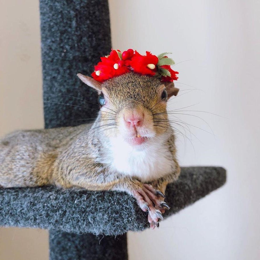 #2 | Jill The Rescued Squirrel Who's Taking Over The Instagram | Zestradar