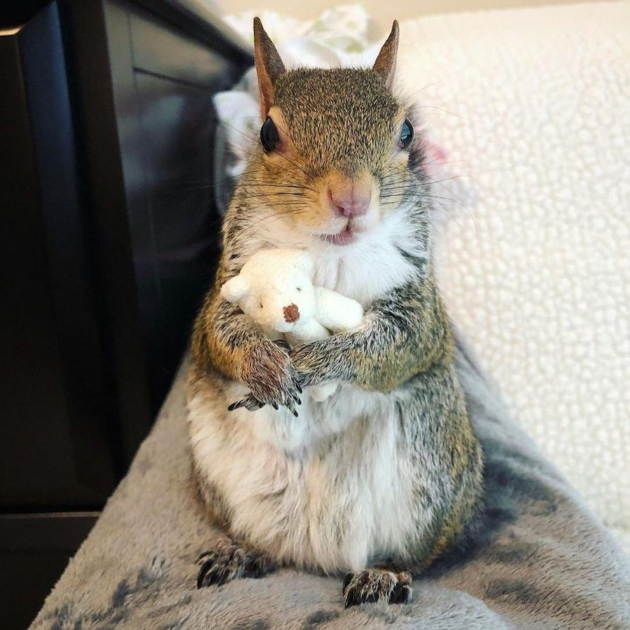 #4 | Jill The Rescued Squirrel Who's Taking Over The Instagram | Zestradar