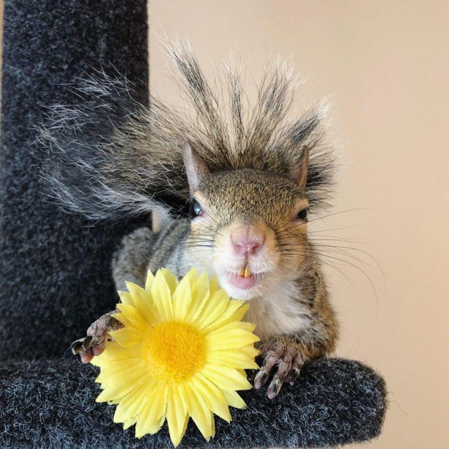 #5 | Jill The Rescued Squirrel Who's Taking Over The Instagram | Zestradar