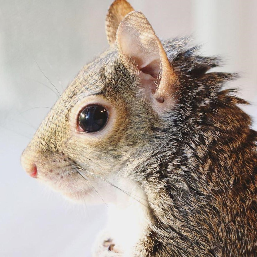 #7 | Jill The Rescued Squirrel Who's Taking Over The Instagram | Zestradar
