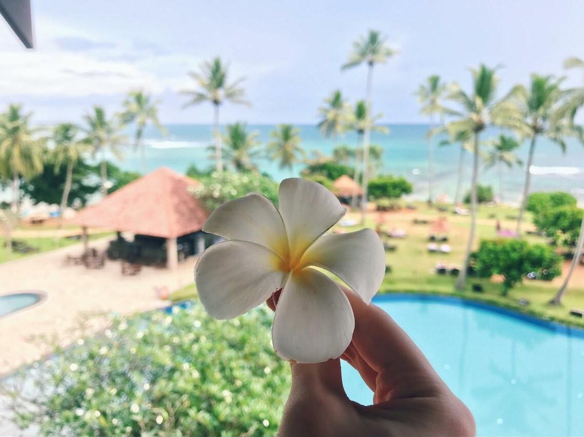 Шри-Ланка | Куда поехать на море зимой: 9 лучших направлений | Brain Berries