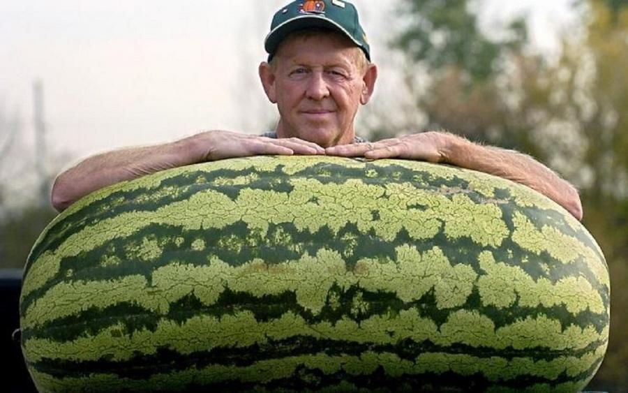 Арбуз | Топ-10 самых больших ягод в мире | ZestRadar
