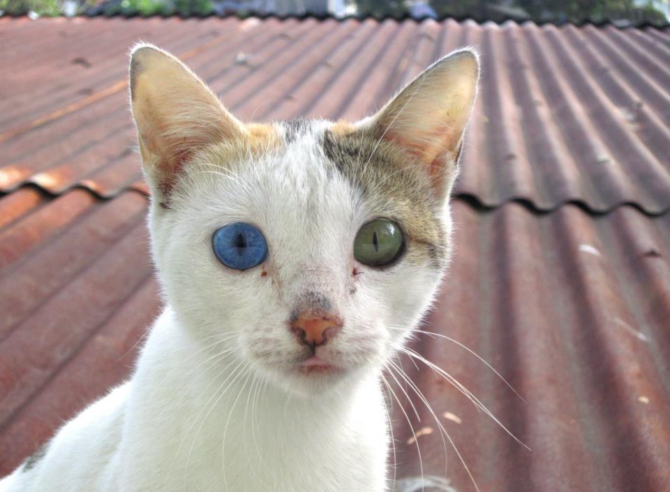 #10 | Những đột biến đẹp ma mị: 15 bức ảnh về những đôi mắt loạn sắc hút hồn | Brain Berries