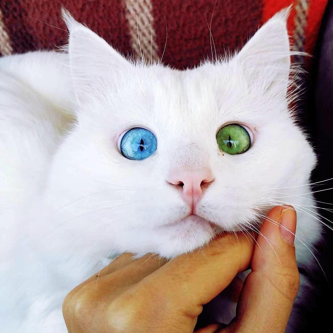 #15 | Những đột biến đẹp ma mị: 15 bức ảnh về những đôi mắt loạn sắc hút hồn | Brain Berries