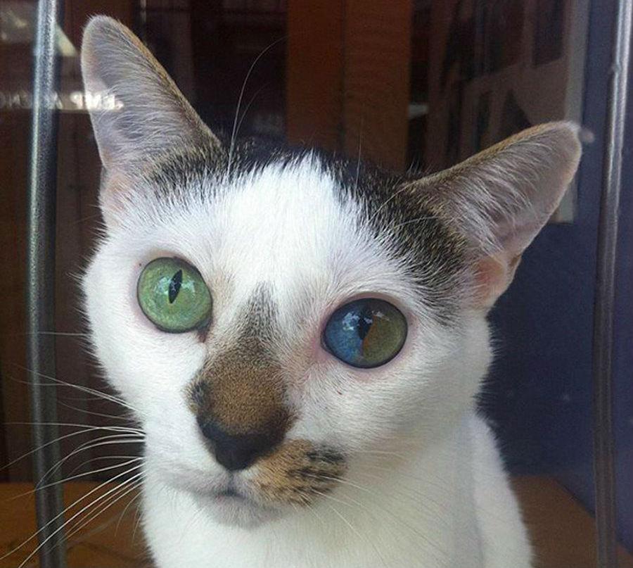#4 | Những đột biến đẹp ma mị: 15 bức ảnh về những đôi mắt loạn sắc hút hồn | Brain Berries