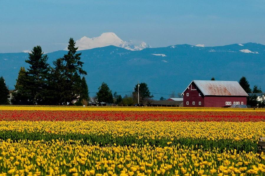Долина Скагит | Топ-10 самых удивительных пейзажей США | Brain Berries