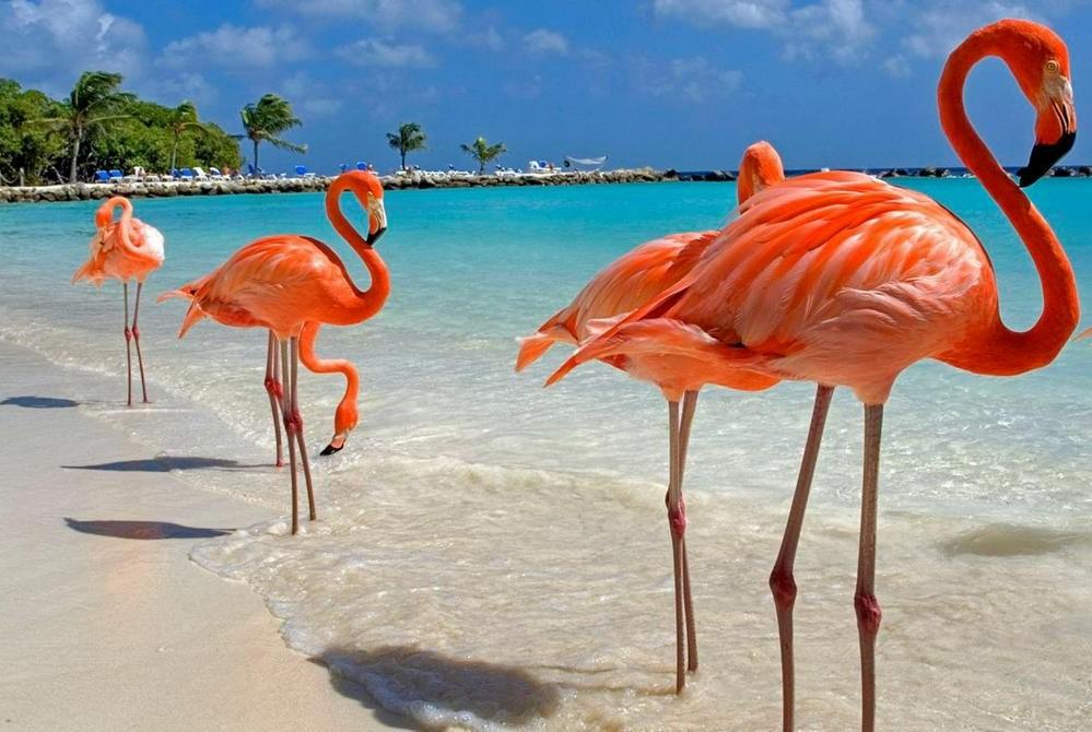 Доминикана | Куда поехать на море зимой: 9 лучших направлений | Brain Berries
