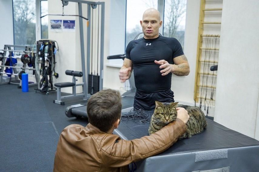 кот Виктор | Как кот Виктор стал звездой социальных сетей и мотиватором для похудения| Brain Berries