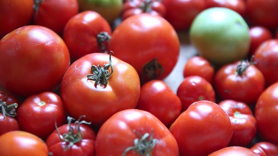 Помидоры | Самые распространенные генетически модифицированные продукты | Brain Berries