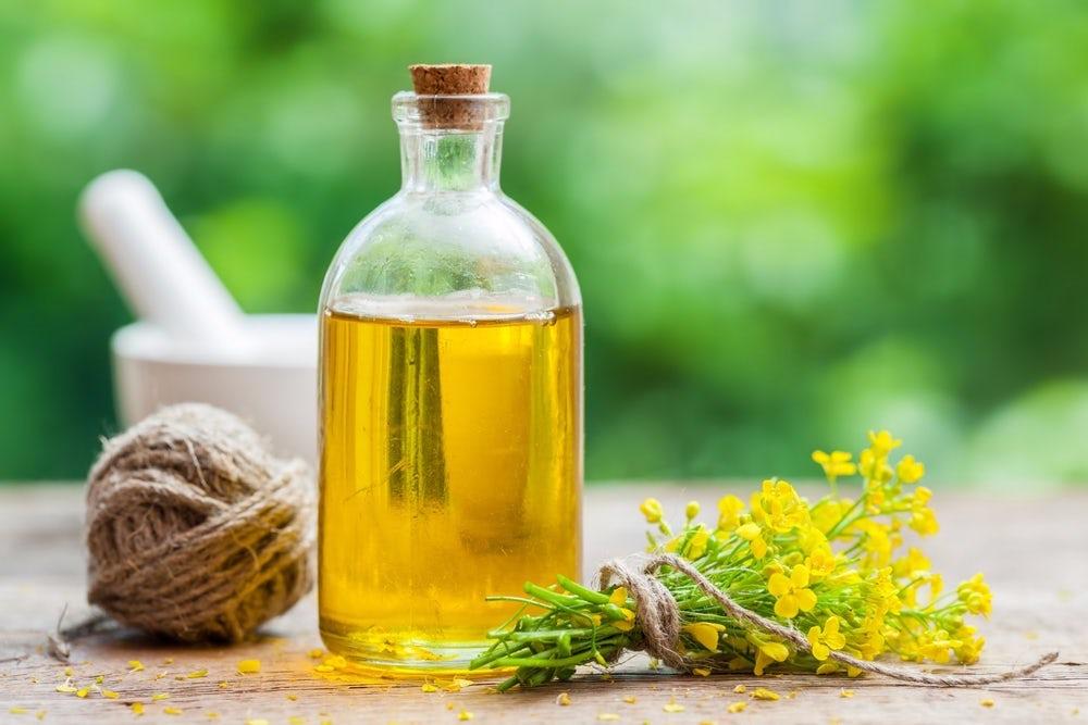 Растительные масла | Самые распространенные генетически модифицированные продукты | Brain Berries