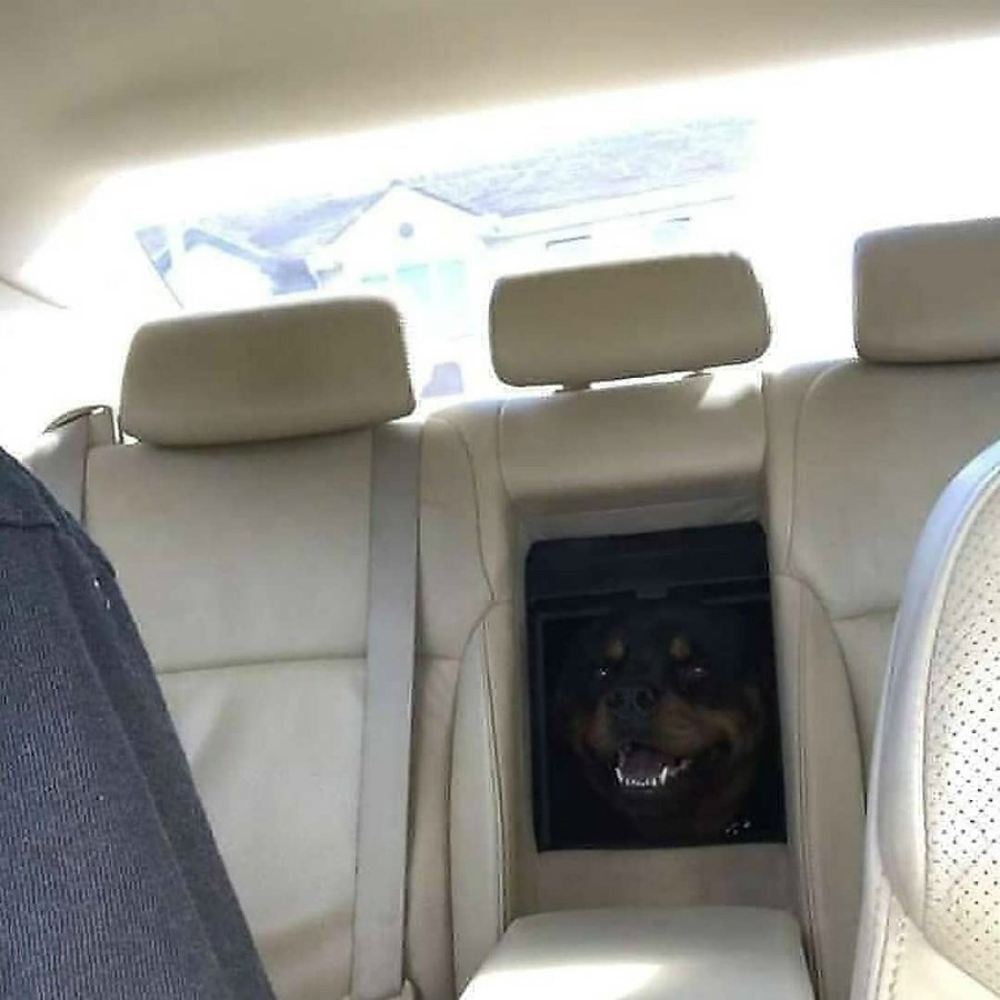 #11 | Take A Break And Enjoy These Photos Of Doggos Being Sneaky And Desperate For Attention | Zestradar