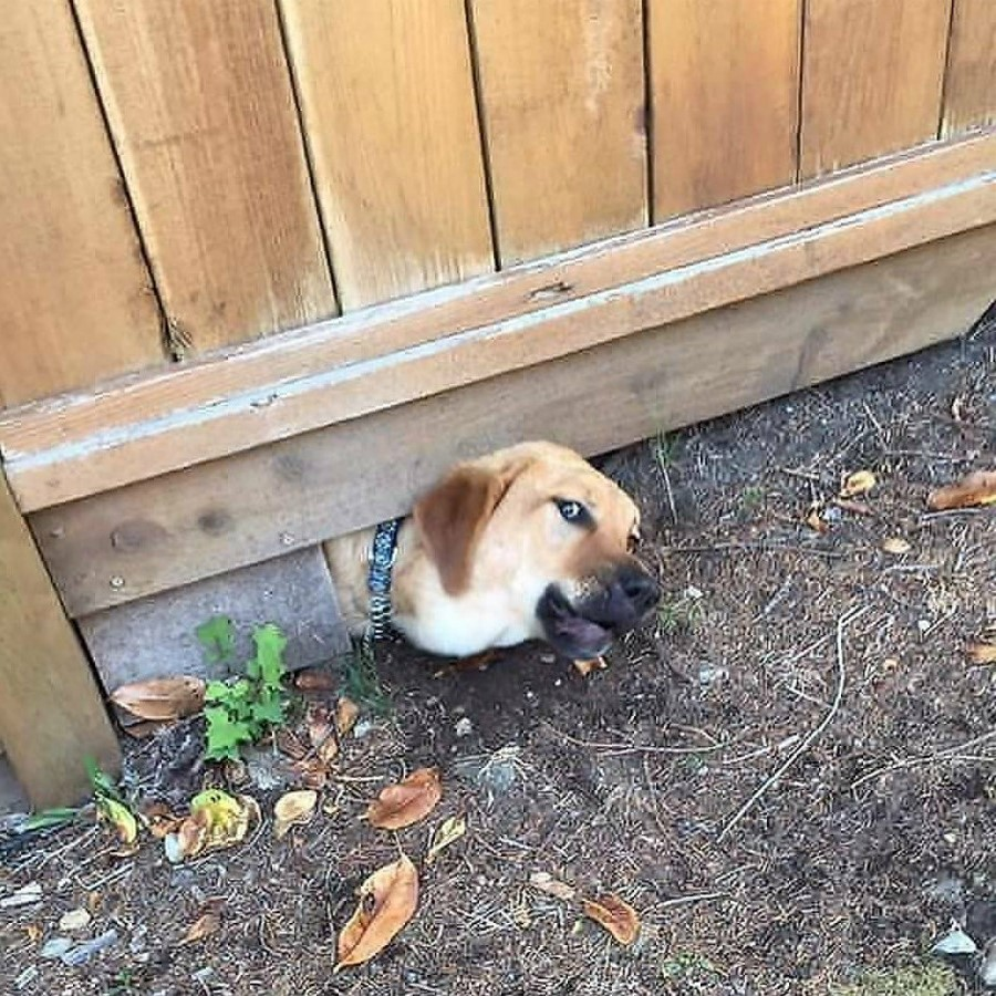 #4 | Take A Break And Enjoy These Photos Of Doggos Being Sneaky And Desperate For Attention | Zestradar