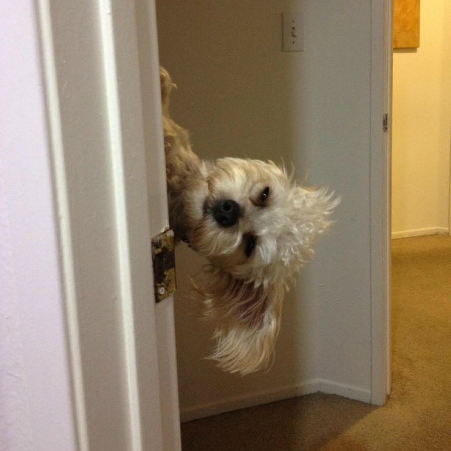 #5 | Take A Break And Enjoy These Photos Of Doggos Being Sneaky And Desperate For Attention | Zestradar