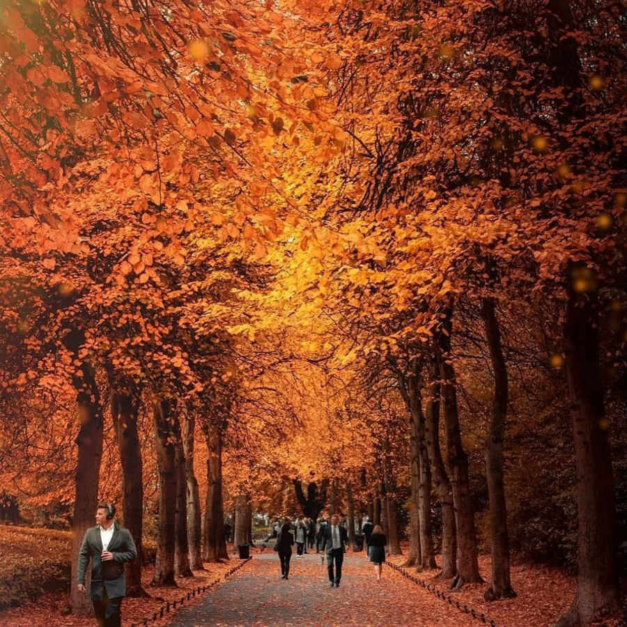 Ireland | This Is What Autumn Looks Like Around The World | ZestRadar