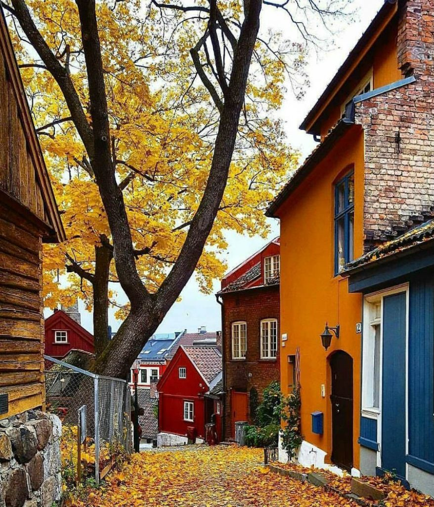 Norway | This Is What Autumn Looks Like Around The World | ZestRadar