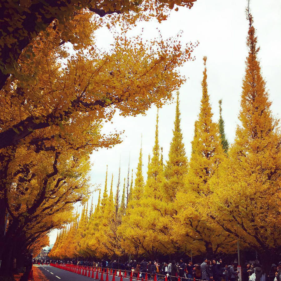 Japan | This Is What Autumn Looks Like Around The World | ZestRadar