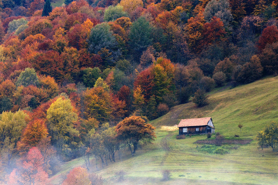 Ukraine | This Is What Autumn Looks Like Around The World | ZestRadar