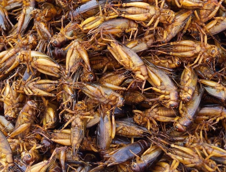 Grasshoppers | 6 Insects That Might Be A Legit Food Source In The Future | Zestradar