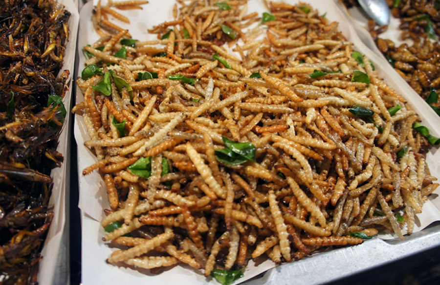 Mealworms | 6 Insects That Might Be A Legit Food Source In The Future | Zestradar