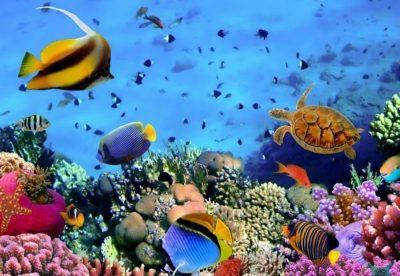 Топ-10 самых красивых морей в мире | Brain Berries