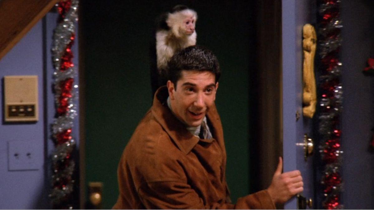 Марсель | 7 животных-актеров, которые покорили наши сердца | Brainberries