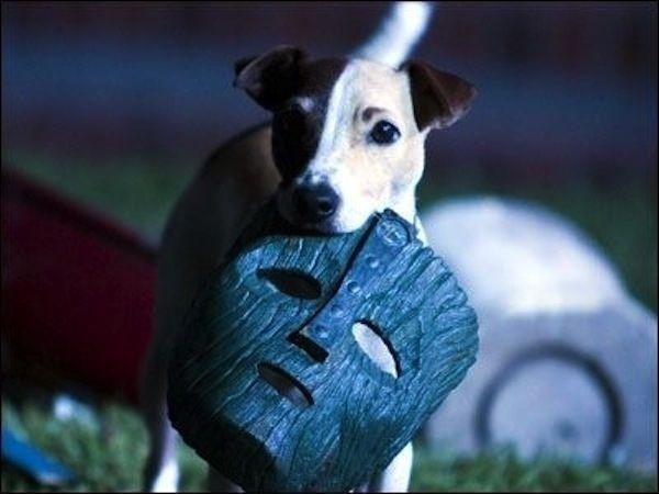 Макс |  7 животных-актеров, которые покорили наши сердца | Brainberries
