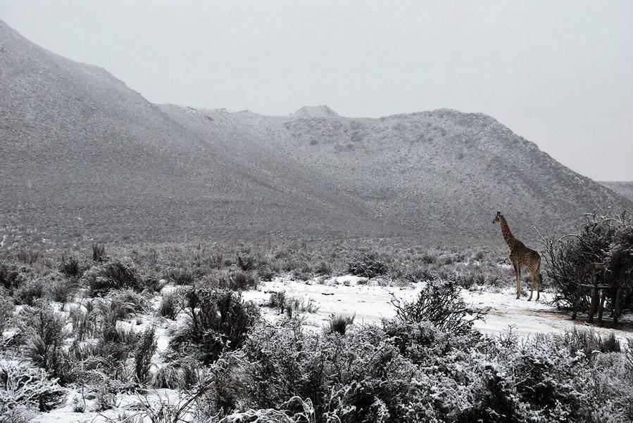 Снег в Африке | 7 причин поверить в глобальные изменения климата | Zestradar