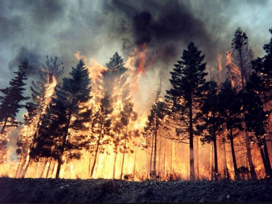 Лесные пожары | 7 причин поверить в глобальные изменения климата | Zestradar