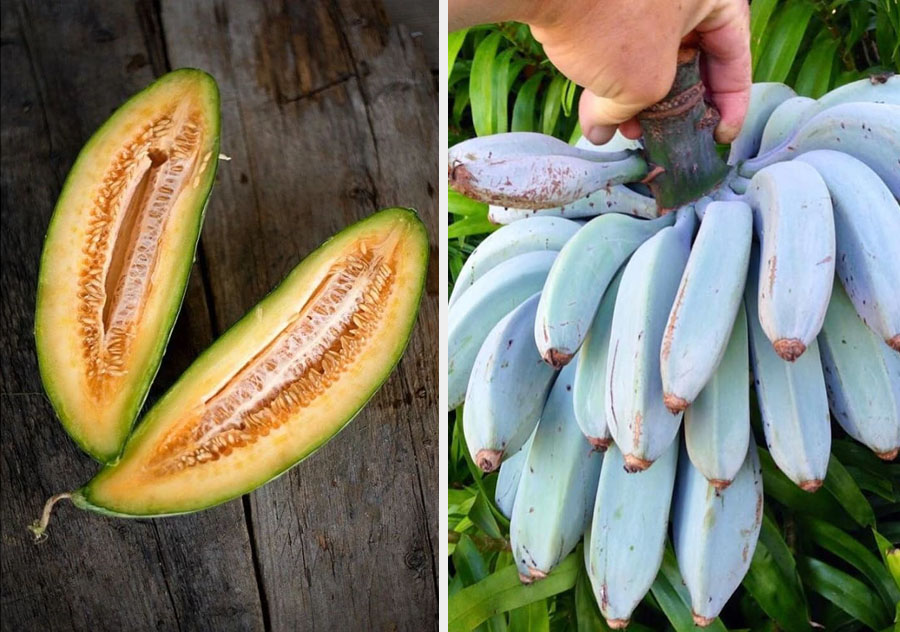 Bananas are genetic hybrids | 10 Mind-Bending Facts About Genes That Explain Everything | ZestRadar