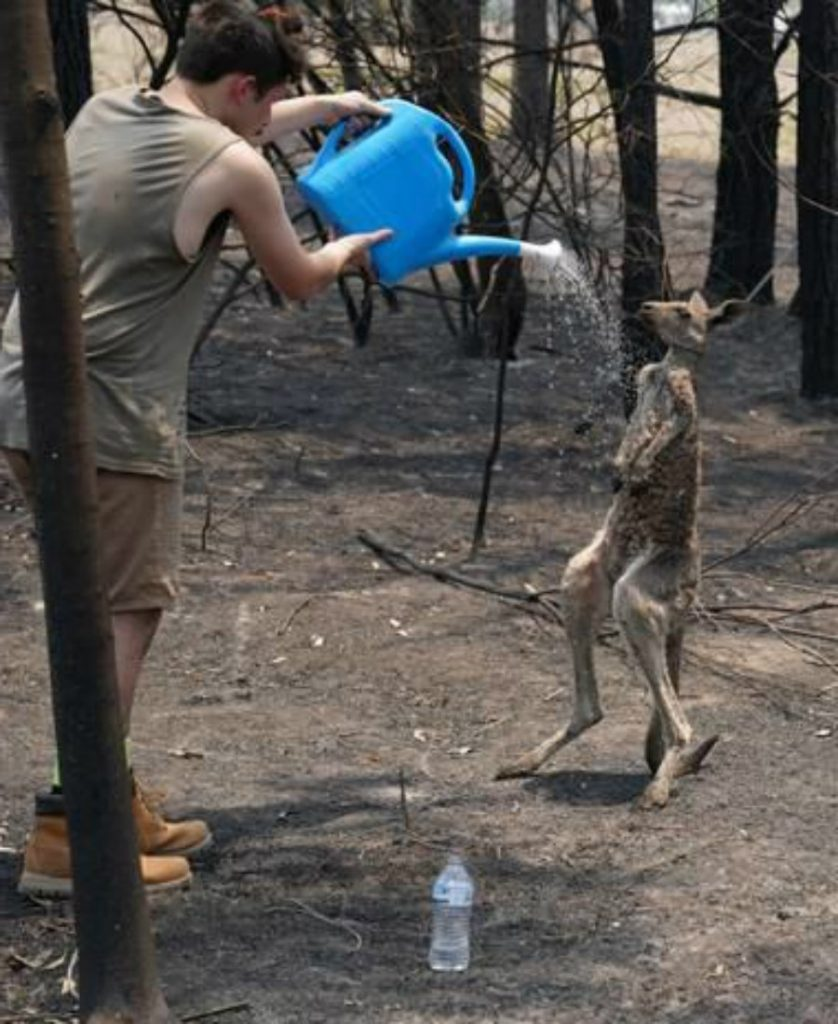 Young kangaroo | 15 Animals Rescued From Australia Bushfires To Melt Your Heart | Zestradar