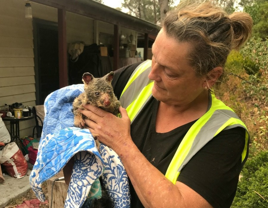 A burnt possum | 15 Animals Rescued From Australia Bushfires To Melt Your Heart | Zestradar