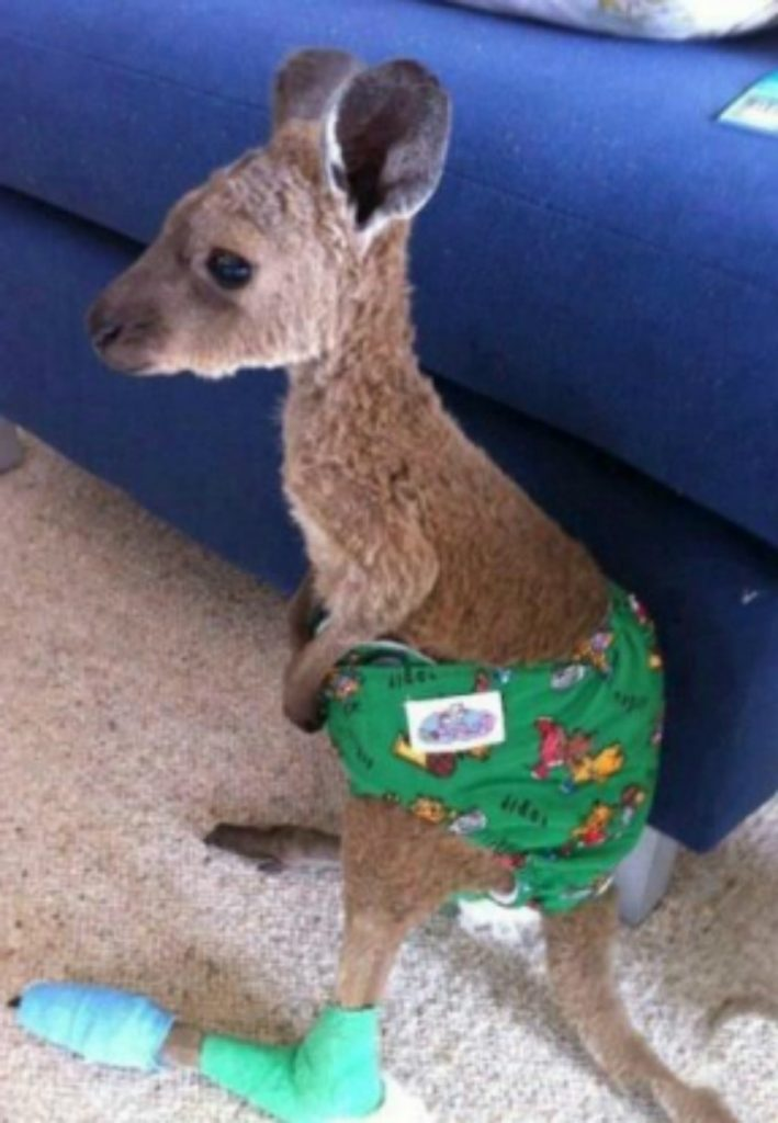 Pouches for the injured | 15 Animals Rescued From Australia Bushfires To Melt Your Heart | Zestradar