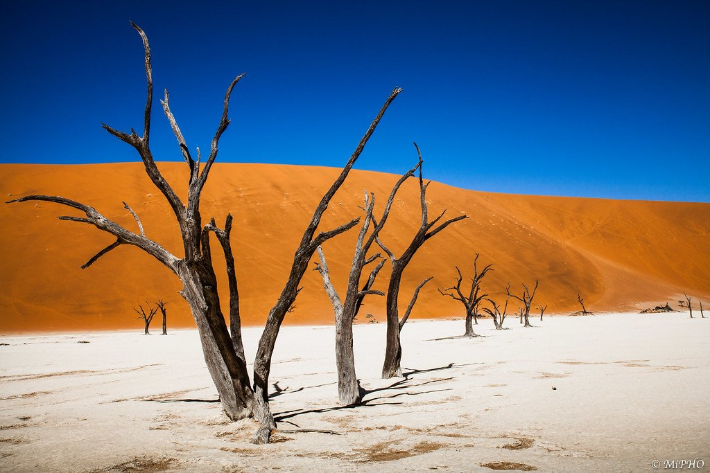 Dead Vlei | 15 Weirdest Places Around The World You Should Visit In 2020 | ZestRadar
