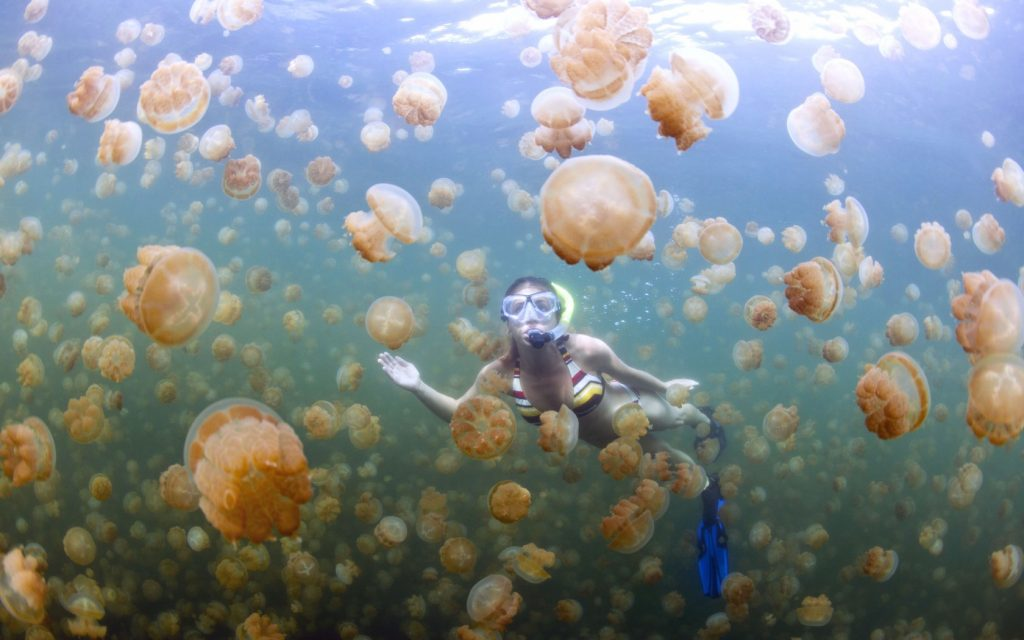 Jellyfish Lake | 15 Weirdest Places Around The World You Should Visit In 2020 | ZestRadar